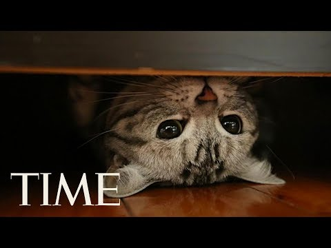 That Time The CIA Trained Cats To Be Spies: Felines Wander Around Without Drawing Attention   TIME