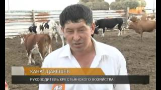 В Теректинском районе ЗКО появится мини-молочная товарная ферма