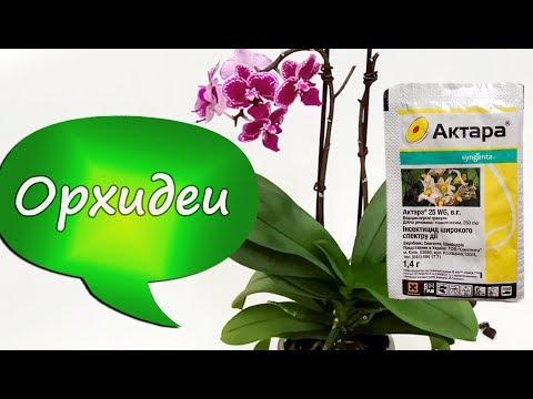20. Как избавится от мучнистого червеца? Обрабатываем орхидею Актарой! Орхидеи в пенопласте