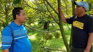 Video Belajar menanam Durian download MP3, 3GP, MP4, WEBM, AVI, FLV Juli 2018