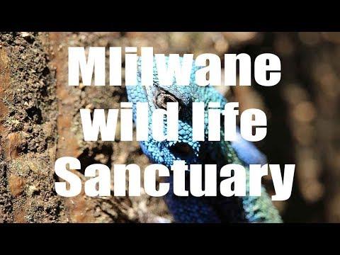 Mlilwane Wild Life Sanctuary, Swaziland - Canon HD - Virtual Trip