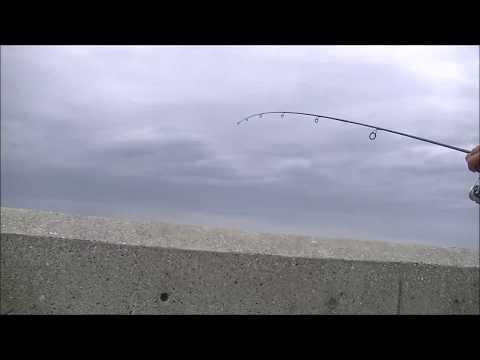 城南島海浜公園で意外な魚がたくさん釣れた