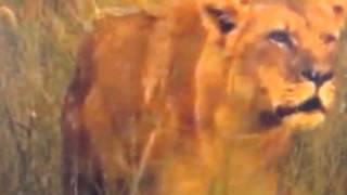 Ministek - Leeuwin op Muizepoten