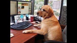 Смешная собака развлекает хозяина  на работе в офисе