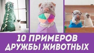Смешная дружба животных: 10 примеров необычных дружественных отношений