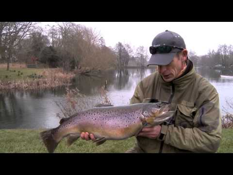Stalking Big Brown Trout - Fly Fishing Lechlade
