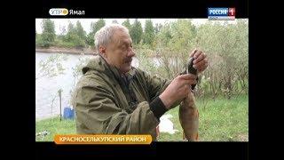 Что паразиты могут рассказать о рыбе? Ученые исследуют реку Таз