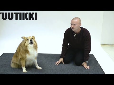 Did This Guy Really Figure Out How To Talk To Dogs?