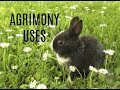 Herbs in ABC order and their uses Agrimony