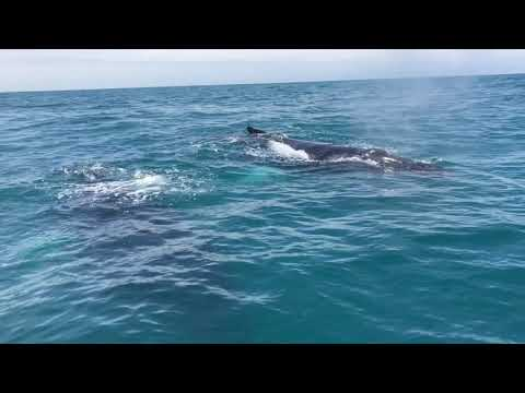Bobby Leach - WATCH: Boy Has Close Encounter With Humpback Whales