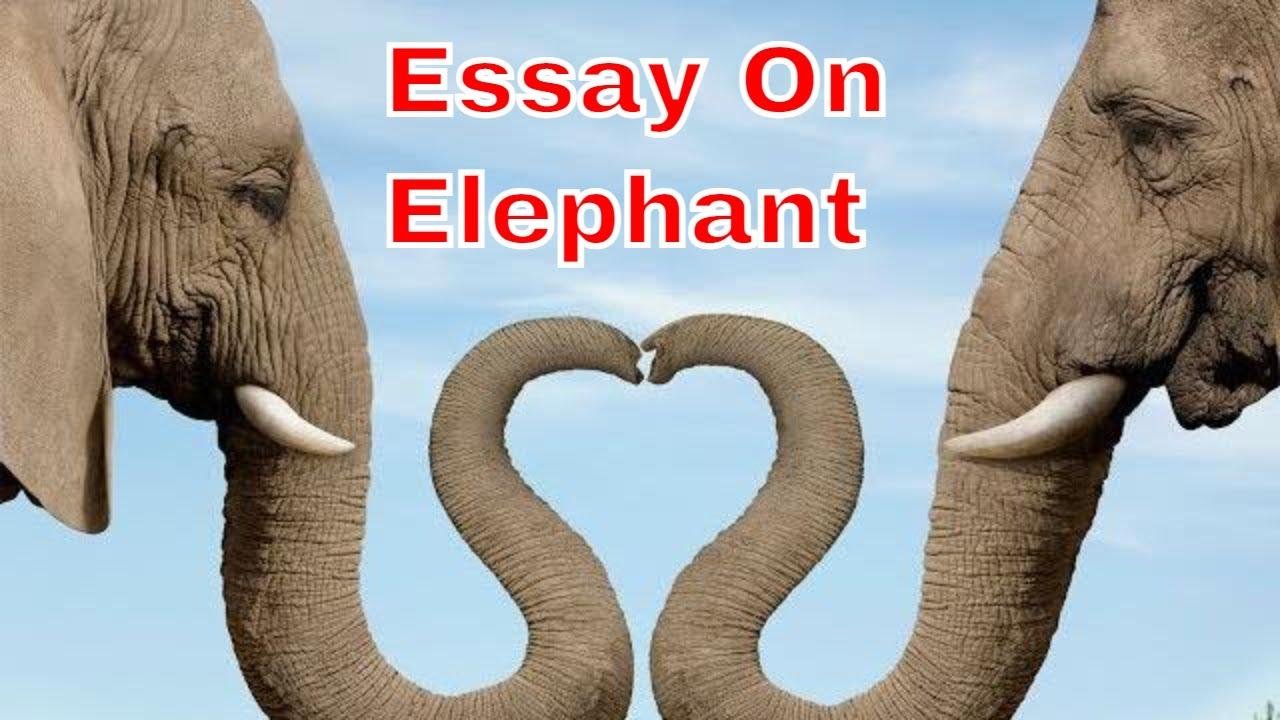 essay about elephant