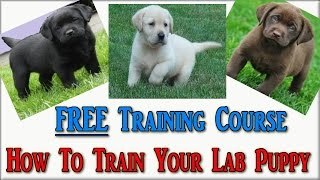 How To Train Labrador Puppies ☼ FREE COURSE ☼ Labrador Retriever Puppies ♥ Labrador  Puppy ♥♥