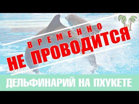 ДЕЛЬФИНАРИЙ НА ПХУКЕТЕ, ПХУКЕТ 2016, КУПАНИЕ С ДЕЛЬФИНАМИ  | Phuket Dolphin Show