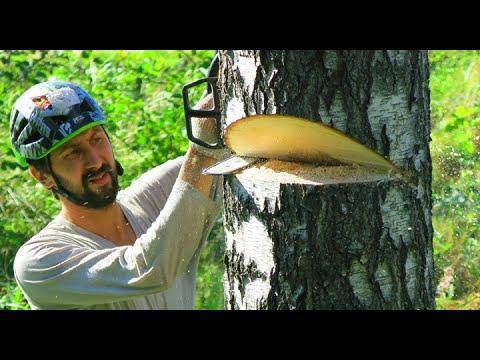 Как пилить дерево чтобы оно упало туда куда тебе нужно