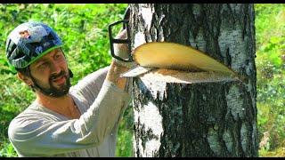 Как спилить дерево бензопилой. Как спилить дерево в нужном направлении(, 2015-08-21T09:17:24.000Z)