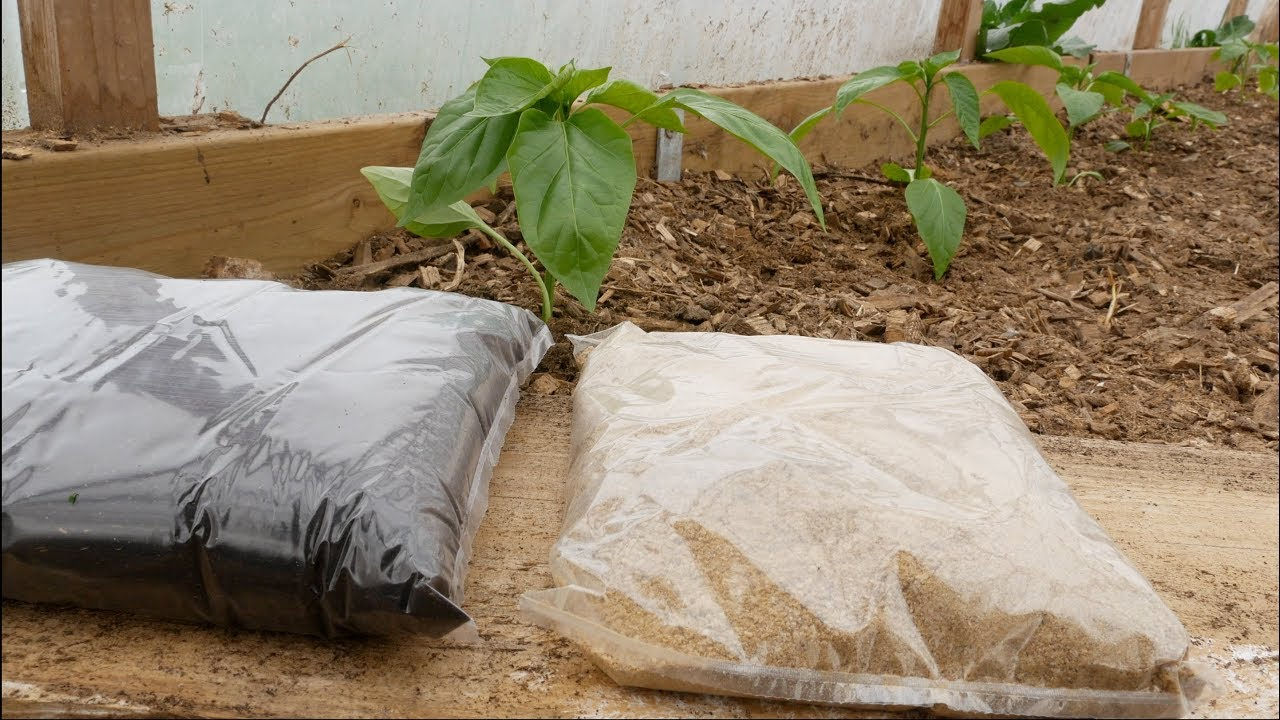 Super Fertilizers: Blood & Bone Meal - How, When, Where, What