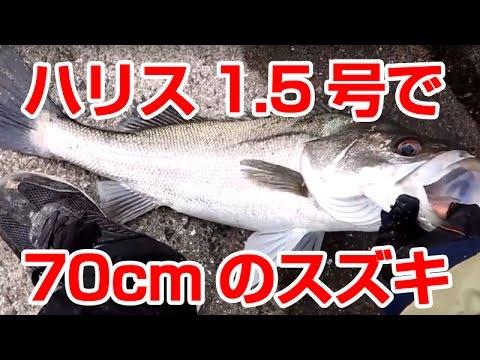 2017年1月19日 熊本県天草市龍ヶ岳町 思わぬ大物が釣れた