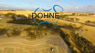 Dohne - Making Australia great again