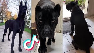 Intimidating Dog Compilation!