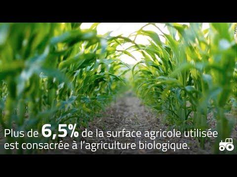 Que pèse vraiment l'agriculture biologique en France ?