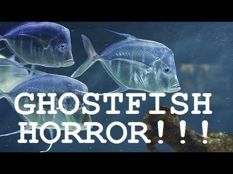 Capture Cards & Ghost Fish (Ninja Gaiden Black) - YouTube
