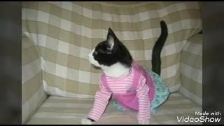 Не представляю себе жизнь без котов,ведь они такие мягкие и милые!