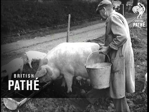 Blind Man Farms 50 Acres 1958
