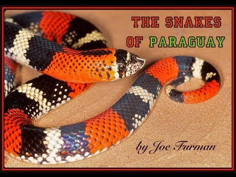 The Snakes of Paraguay MOVIE!