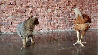 Эти непростые животные. Фильм 2 | ЕХперименты с Антоном Войцеховским