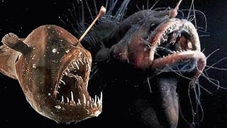 Top 10 Creepiest Deep Sea Creatures - Part 2