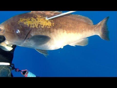 grida avı -37m, golblotch grouper, zıpkınla balık avı, balık avı, spearfishing