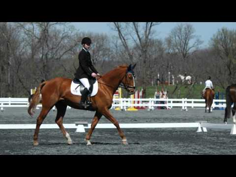 SAS Sport Horses 2015 Yearbook Video