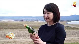 晨光|着眼天下: 福岛重建走出核辐射阴影 当地女性打造美食新可能