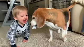 Baby and Dog Compilation | Funny Dogs Louie & Marie | Ep2