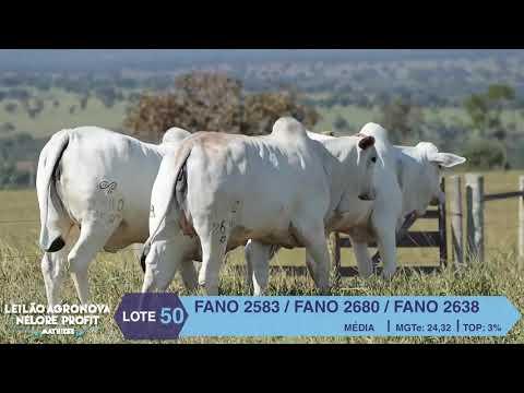 LOTE 50 FANO 2583 X 2680 X 2638