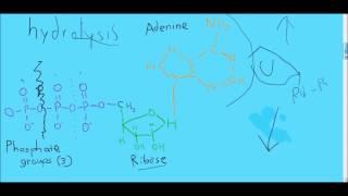 ATP hydrolysis in 7 minutes