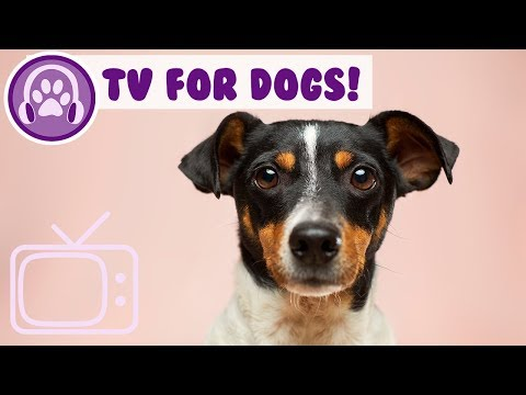 TV for Dogs! Entertain and Relax Your Anxious or Bored Dog!