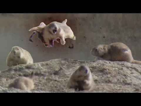 Prairie Dog Hunting Armageddon 3! Slo-mo EXPLOSIONS!