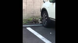 買い物に行く途中で猫の鳴き声がしたので見てみたら…