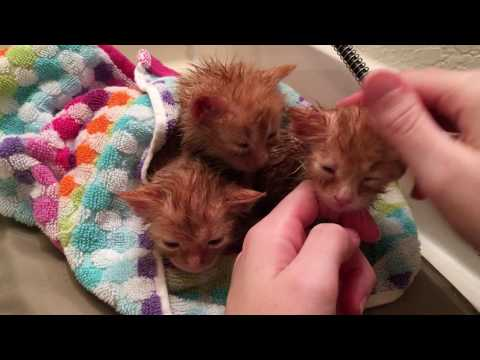Comforting Baby Kittens After Bath and Inspecting them :)