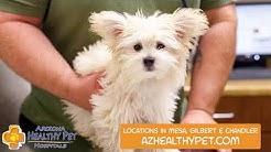 Arizona Healthy Pet Hospitals   Veterinary Services in Mesa