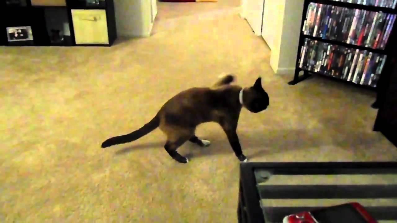 Duct Tape Cat Meme