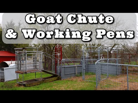 GOAT CHUTE | Goat working pens | Goat sweep tub | Kiko goats | Goat Shelters