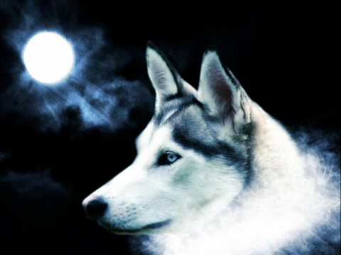 Wolf Relaxation Music Youtube