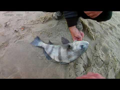 Chincoteague Striper Fishing 2017 With Akaso EK7000 Action Cam