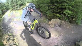 Hamsterley Red Route