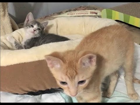 One Of The Hot Mess Kittens Is A Female!?! - #26 - Weekend Visitor