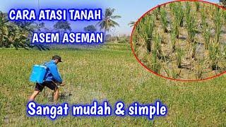 Download lagu cara mengatasi asem aseman pada tanaman padi
