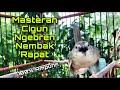 Masteran Cigun Gacor Cocok Untuk Pancingan Ciblek Gunung Belajar Ngebren Nembak Rapat  Mp3 - Mp4 Download