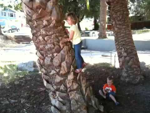 Skye climbing palm tree